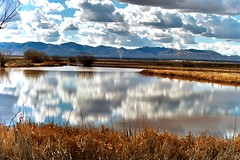Arizona Reflections (moelynphotos) Tags: reflections reflexions moelynphotos reflectsobsessions