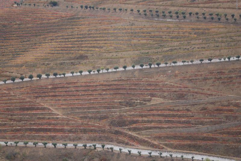 Folgosa do Douro 031
