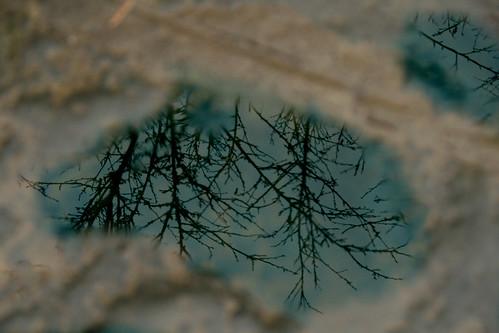 你拍攝的 20081116數位攝影_阿里山之旅139-2.jpg。