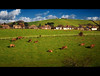 And For Every House There Shall Be One Cow (Finntasia old) Tags: houses brown field animals rural fence countryside cows farm dorset housing bridport graze beautifulcapture shieldofexcellence goldenphotographer diamondclassphotographer flickrdiamond finntasia nigelfinn