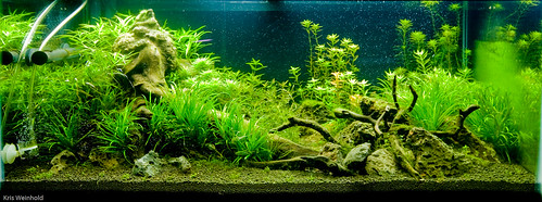 50G - 3 Weeks In