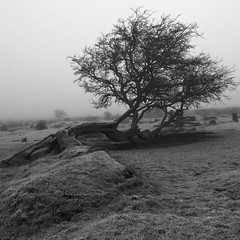 Taking Things Lying Down (Andy Brown (mrbuk1)) Tags: blackandwhite bw tree grass rock fog stone landscape branches tired fallen ethereal granite trunk reclining relaxed lain graceful beaten dartmoor weary muted subtle bestofbw