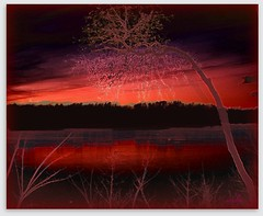 raspberry sunset revisited    (xandram) Tags: sunset lake tree silhouette photoshop picnik pinks abigfave proudshopper theawardtree naturescreations