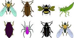 robaki (Agnieszka Gietko) Tags: bugs robak robaki insekty