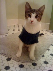 The things I do to my cats