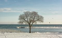 Winter Sentinel - DSCN2933 ep (Eric.Parker) Tags: winter snow toronto tree ice beach africanamerican lakeontario sunnyside 2009