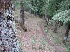 Per boschi (josverde) Tags: montagna sicilia boschi