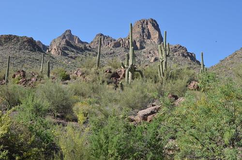 Arizona 2011 282