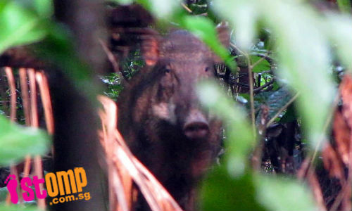 If you spot wild boars at Lower Pierce Reservoir, do not disturb them as they may attack