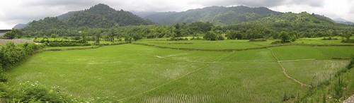 Rice paddies along the Caspian