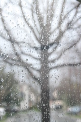 Tree on Stormy day (Jill Clardy) Tags: shadow tree window rain day branches rainy raindrops rainstorm twigs
