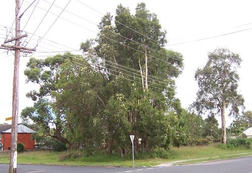 Cnr Ocean Beach Road & Pioneer Road Umina
