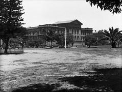 The (Australian) Museum, College Street, Sydney (Powerhouse Museum Collection) Tags: building field king henry palmtree collegest naturalhistorymuseum powerhousemuseum australianmuseum xmlns:dc=httppurlorgdcelements11 dc:identifier=httpwwwpowerhousemuseumcomcollectiondatabaseirn31395