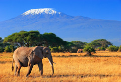 Mega Nature (| HD |) Tags: africa mountain elephant tree 20d kilimanjaro animal canon landscape mt kenya wildlife safari hd darwish hamad alemdagqualityonlyclub highqualityanimals