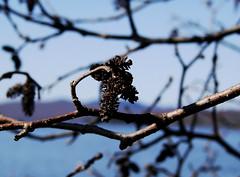 Spring-Blues