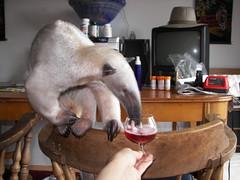 Anteater wine