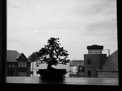 bonsai gallery
