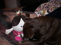 Hyzzie chews on the princess toy