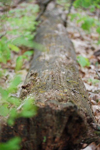 tree DSC_6992