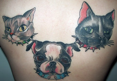 Dimitra's Back Tattoo! (All-Mighty Clothing) Tags: cats pets cute boston tattoo back brodie terrier dimitra