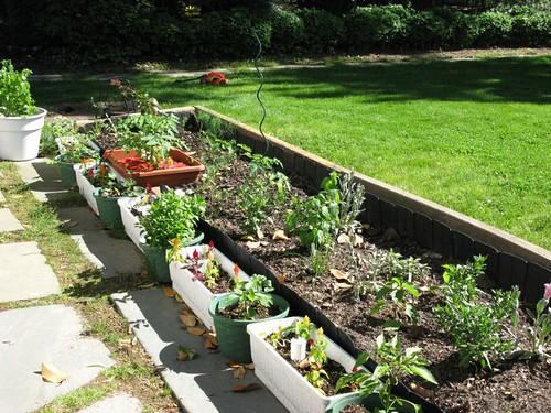 mom's test garden