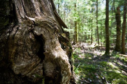 Trees in Keji