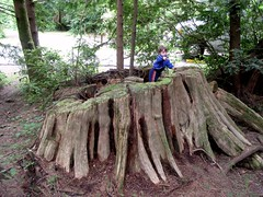 Defending his Fort (shetha) Tags: camping playing gabriel oregon coast moss woods fort stump huge capelookout undergrowth rving oldforest