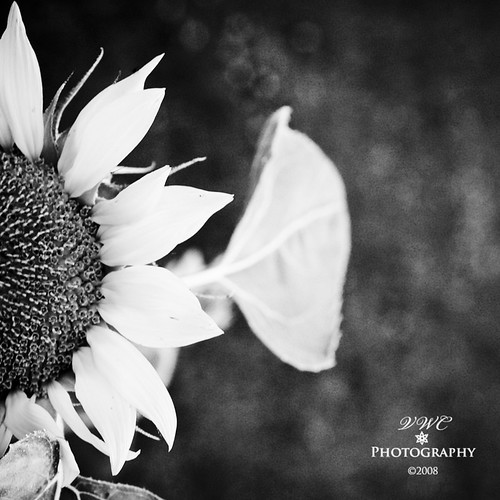 ..b&w sun beauty..