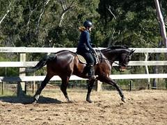 Canter (ducktourer) Tags: horse female rural training farm country australia arena nsw zac equestrian canter equine horseriding hodgie helle dressage warmblood girlsandhorses ducktourer