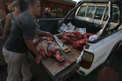 The local, mobile butcher. Hanga Roa, Rapa Nui.