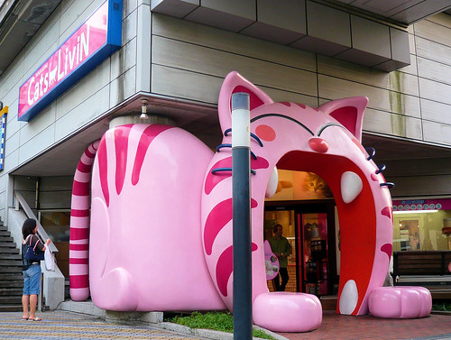 cats magasin