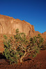 (Maud77) Tags: arizona usa southwest tree sandstone navajo monumentvalley buttes arenaria ushighway163 siltstone navajonationreservation tsébiindzisgaii trip2007 siltite