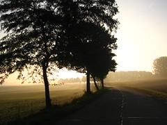 Morning on the road - Matin en chemin