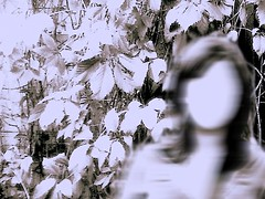 i'mnothere (marin.a) Tags: bw white blur me girl face leaves forest picasa here sp noface processed alot photofiltre imnothere