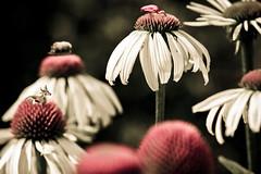 Animal's_Flowers (Rufra (Francesco Russotto)) Tags: flower color strange animal canon francesco kartpostal platinumphoto aplusphoto ysplix colourartaward goldstaraward llovemypics flickrlovers rufra thatscreativity russotto