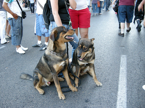 Gay dogs on the pride parade