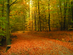 Falling Leaves (_David_Meister_) Tags: autumn orange tree green yellow forest way path herbst gelb grn wald bume baum pathscaminhos