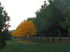 Un tocco di giallo (Ola55) Tags: autumn trees fall leaves yellow foglie alberi giallo fabulous autunno distillery perugia italians naturelovers naturesfinest wonderworld supershot bej percorsoverde aplusphoto naturefinest colourartaward fdream landscapesdreams worldtrekker absolutelystunningscapes yourcountry ola55