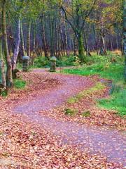 DSCF5346 (A Girl Named Ruth ;o)) Tags: wood bridge autumn trees tree scotland colours path perthshire millenium perth ruth 2008 trotter bankfoot colourartaward ruthtrotter