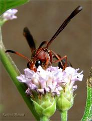 The Flower and The Bug (Karina Morais) Tags: beautifulmonsters