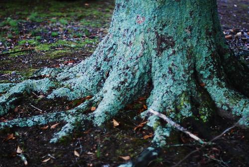 i <3 roots
