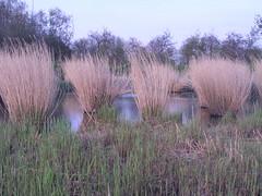 Zevenhuizen - Koornmolengat (Marianne de Wit) Tags: trees texture nature dutch landscape bomen zevenhuizen nationalparkdehogeveluwe specialtrees specialebomen stucktuur nederlandselandschappen