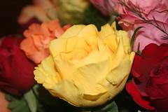 Rosa amarilla (Jos Francisco_(Fuen446)) Tags: flores rosas distillery amarillas 10millionphotos ramosdeflores flowersarefabulous