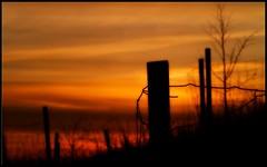 Sunset on the Hillside (Kirsten M Lentoft) Tags: sunset fence denmark hill silhouettes pole herstedhøje kirstenmlentoft herstedøster