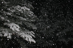 Night Snow (007 Photo Guy) Tags: winter white snow black cold fall dark fun interestingness interesting colorado darkness quality great best creepy falling stuff snowfall pagosasprings