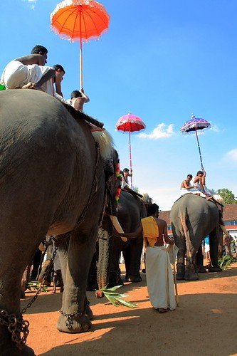 Getting ready for Pooram :: Explore 387