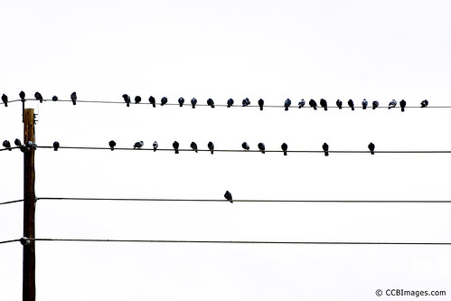 Birds on (a) Wires
