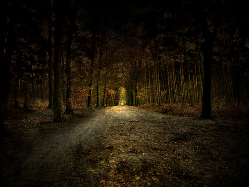Dark Woods Path Dark Path