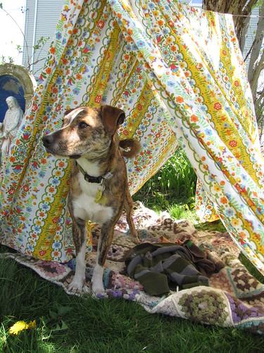tent and Luke