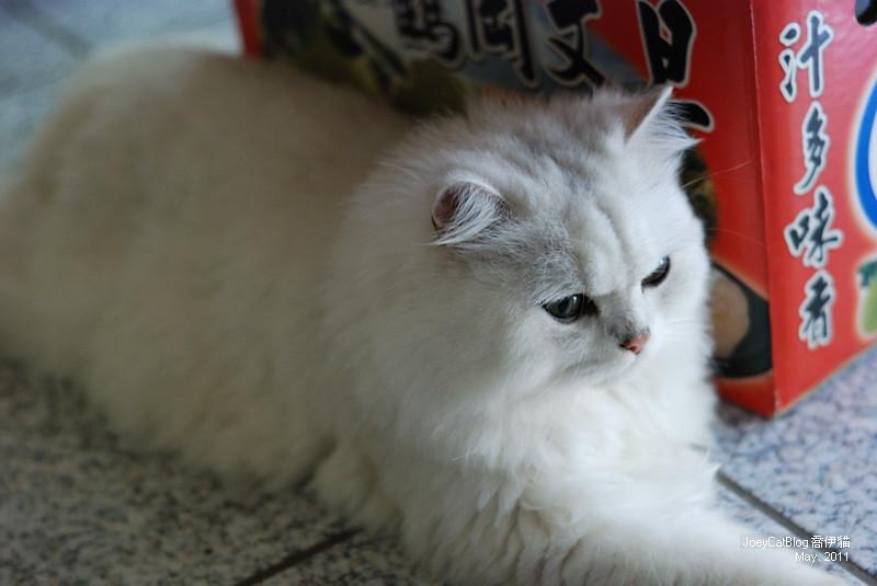CAT_米米__DSC_1140